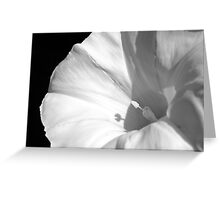 Elegant Intruder Greeting Card