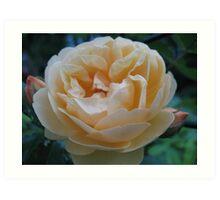 Summertime Lemon Rose Art Print