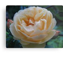 Summertime Lemon Rose Metal Print