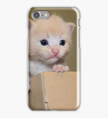 Kitten in a cardboard box iPhone Case/Skin