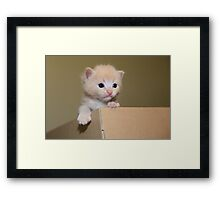 Kitten in a cardboard box Framed Print