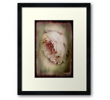 Faded beauty Framed Print