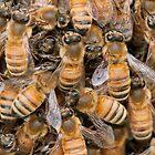 Bee Ensemble by toby snelgrove  IPA