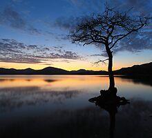 Milarrochy tree by Grant Glendinning