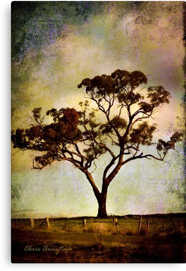 Earth's poetry by Chris Armytage™
