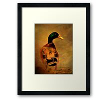 A duck ... Framed Print