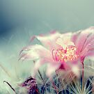 candy bloom. by DanielaVphotos