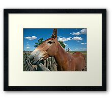 Mule From 1880 Town Framed Print