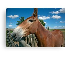 Mule From 1880 Town Canvas Print