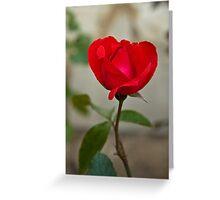 Van Gogh Red Rose  Greeting Card
