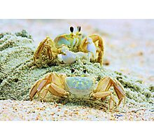 Ghost Crabs Photographic Print