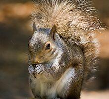 Squirrel Lunch by Geoff Carpenter