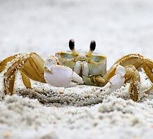 Ghost Crab by Paulette1021
