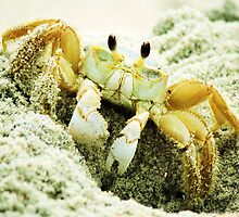 Beach Crabs by Paulette1021