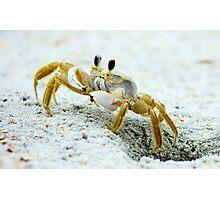 Love Crabs Photographic Print