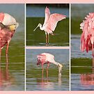 In the Pink  by Karen  Moore