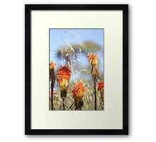 Red Hot at The Springs Framed Print