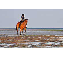 Sunset Gallop Photographic Print