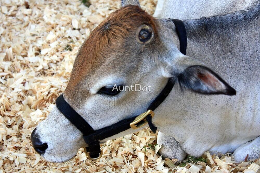 Miniature Zebu Cow by AuntDot
