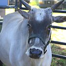Miniature Zebu Bull by AuntDot