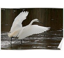 The Little Egret Poster