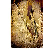 Gypsy Gold Photographic Print