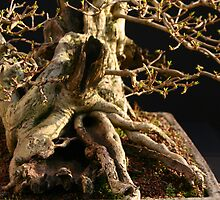 Detail of Privet Bonsai by Harry Harrington