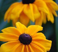 Ray - A Drop of Golden Sun by HankaBanka
