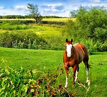 Horse in the Meadow by Nadya Johnson