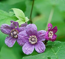 Purple Flowering Rasberry by Mike Oxley