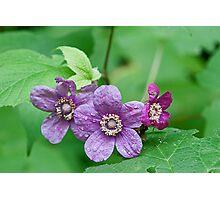 Purple Flowering Rasberry Photographic Print