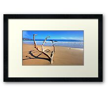 Rainbow Beach Driftwood Framed Print