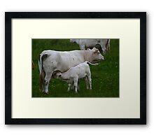 Baby's Momma Framed Print