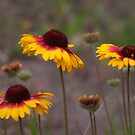Wildflowers on my Walk in the Meadow by David Friederich