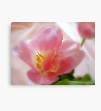 Pink Satin Canvas Print