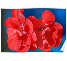 Red garden flowers Poster