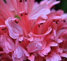 Pretty in pink petals by Debbie Roelle
