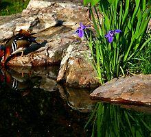 Mandarin in the Mirror by Lisa G. Putman
