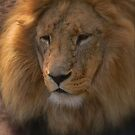 A Day at the Zoo - Gods Greatest Creation ( 1 ) by Larry Lingard-Davis