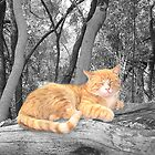 Uno&#x27;s taking a nap... (Ginger Cat , Nothern West, South Africa) by Qnita