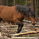 Watchful Stallion by JamesA1