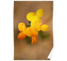 Lotus corniculatus Poster