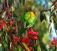 Purdy Bird by Airwalker