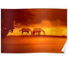 Horses in the fog 2 Poster