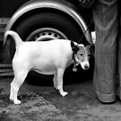 Dog on the street # 2 by Jean-Luc Rollier