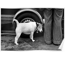 Dog on the street # 2 Poster