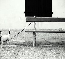 The Bench. by Jean-Luc Rollier