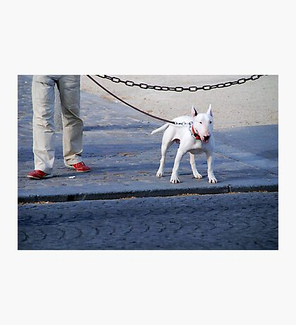 Dog on the street # 5 Photographic Print