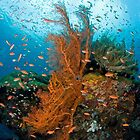 Seafan community by Bob  Whorton