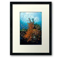 Seafan community Framed Print